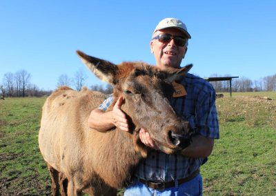 Eric with Elk Cow on Regal Point Farms